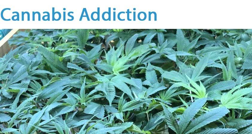 Cannabis addiction london
